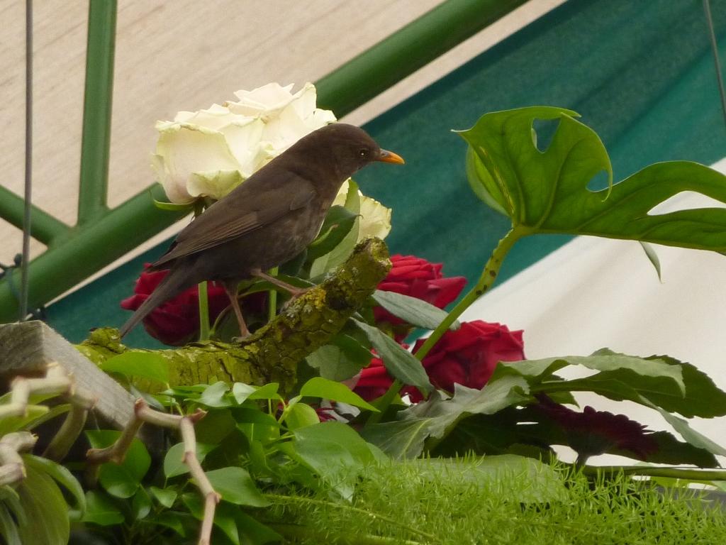 Ein echter Vogel hat sich in das Zelt verirrt